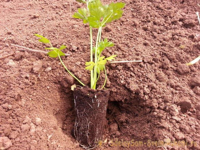 Топ-10 ошибок при выращивании овощей, которые могут стоить вам урожая