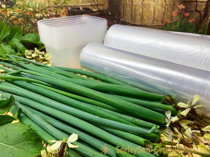 Способы заморозки зеленого лука на всю зиму